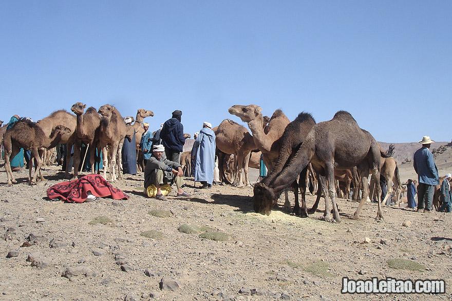 Camel Market in Imilchil