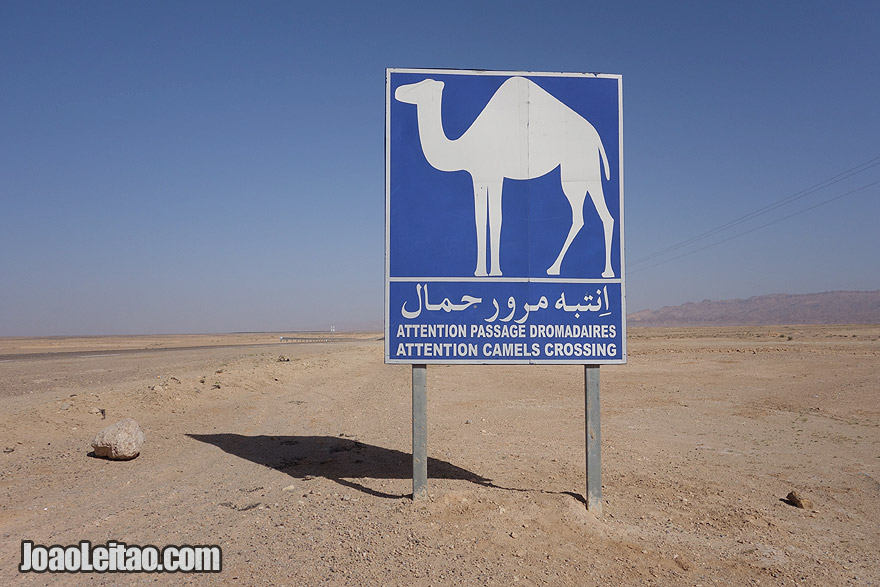 Sinal de zona de travessia de camelos, na Tunísia