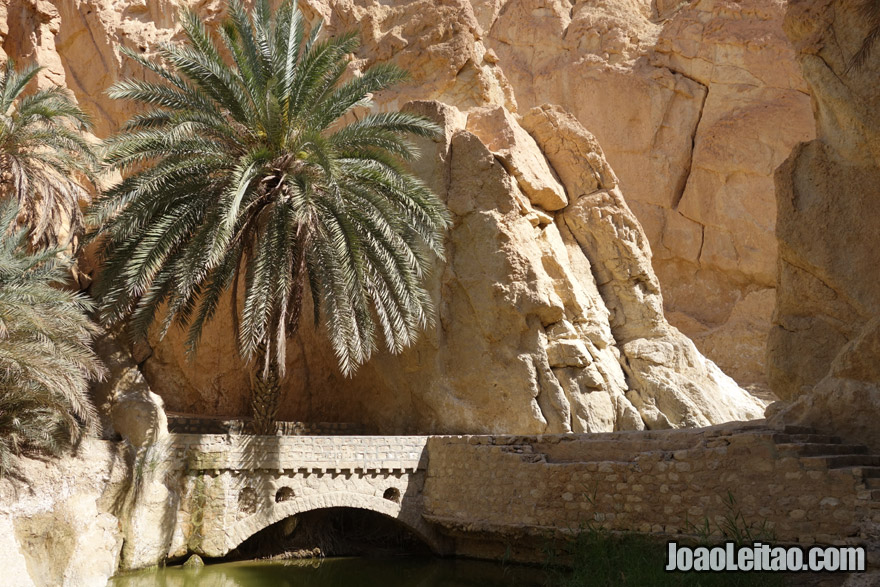 Chebika Mountain Oasis in Tunisia