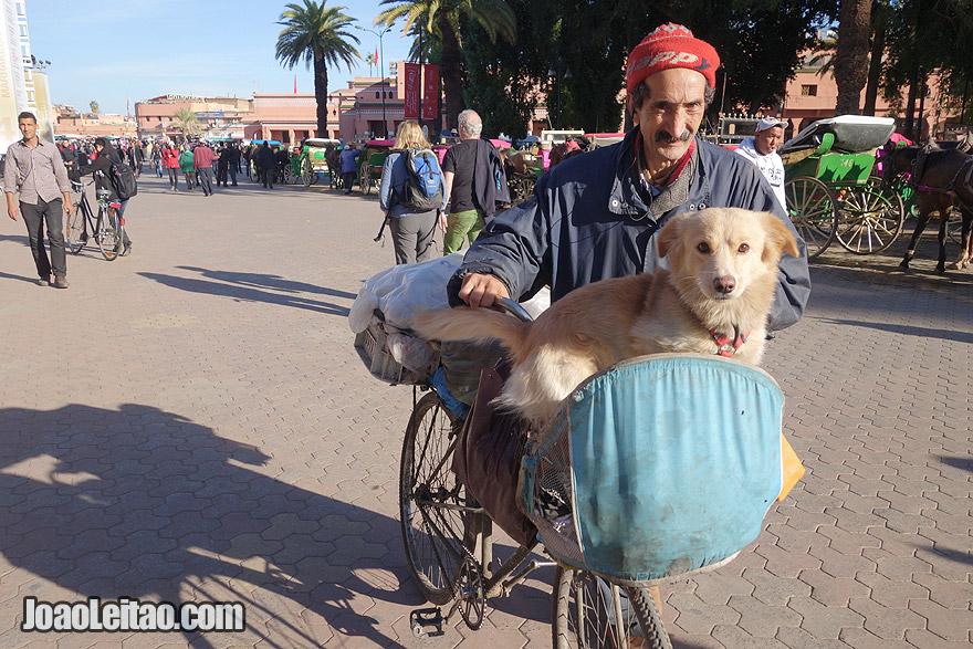 Homem com o cão de bicicleta em Marraquexe