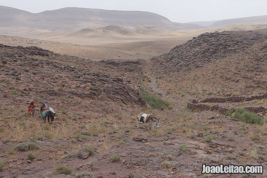 Nomad family with donkeys coming back from oasis