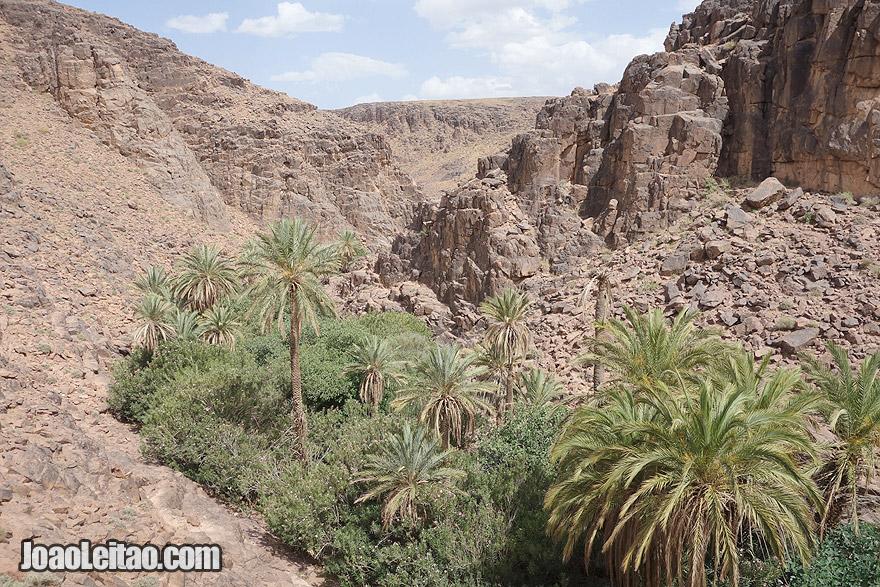 Rocky canyon oasis near Jbel Adad