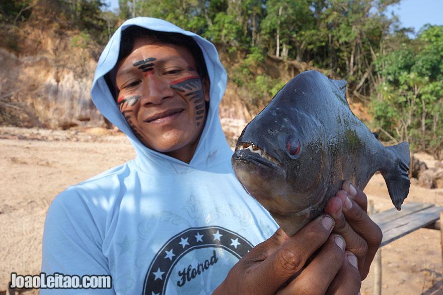 Dangerous piranha fish