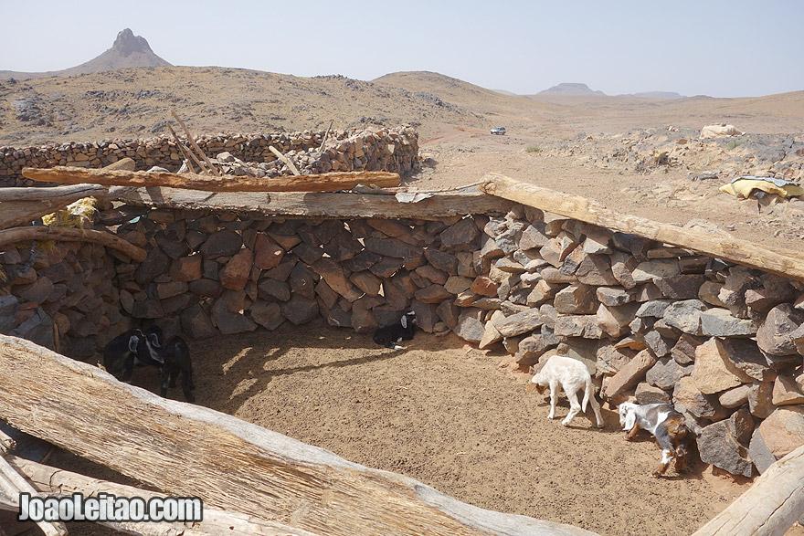 Sheepfold in Azib N Oudad
