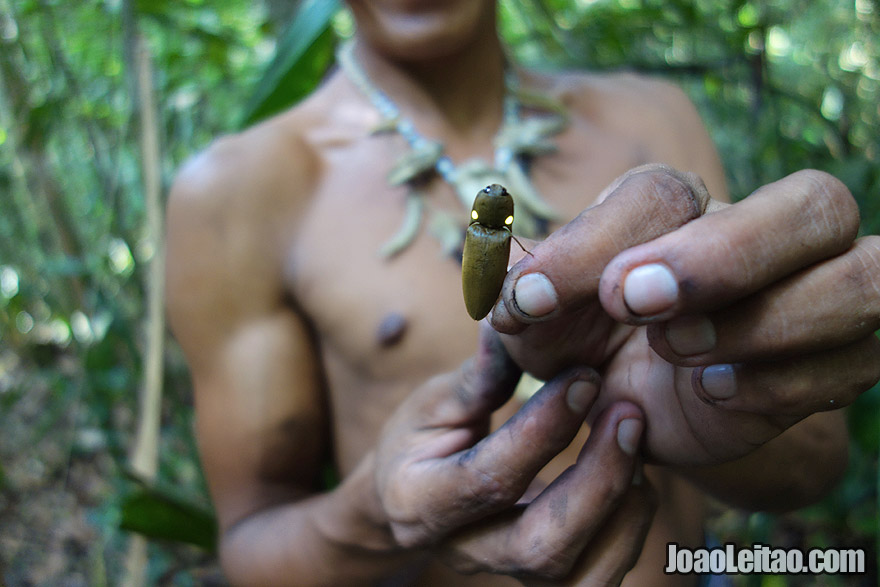 Insect in the Amazon rainforest