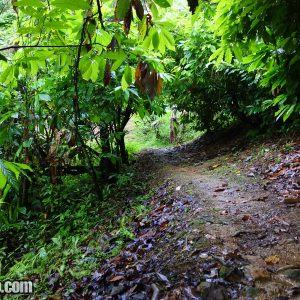 Trail to Pirates Bay beach