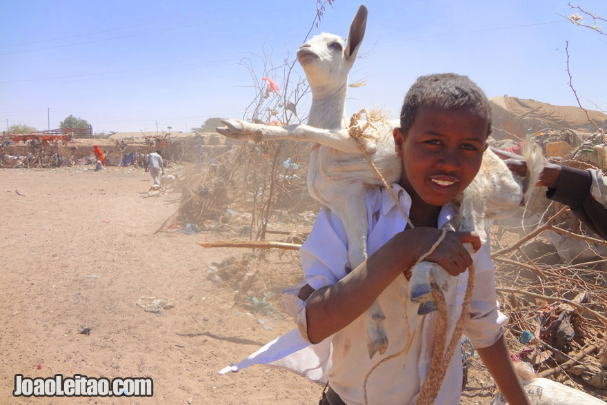 Kid carrying goat in Hargeisa animal market