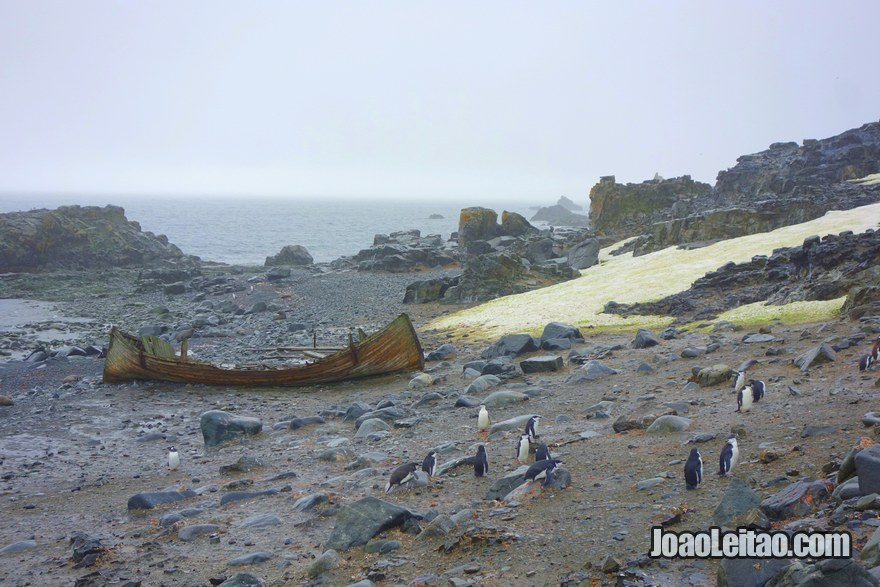 Wreck of a wooden boat, penguins and Antarctic fur seals in Half Moon Island