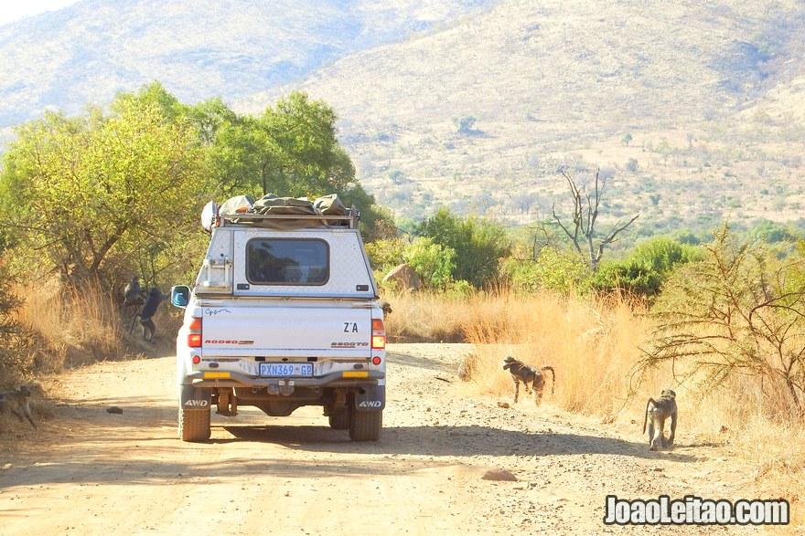 DPreciso de um jipe para fazer o meu próprio safari na África do Sul