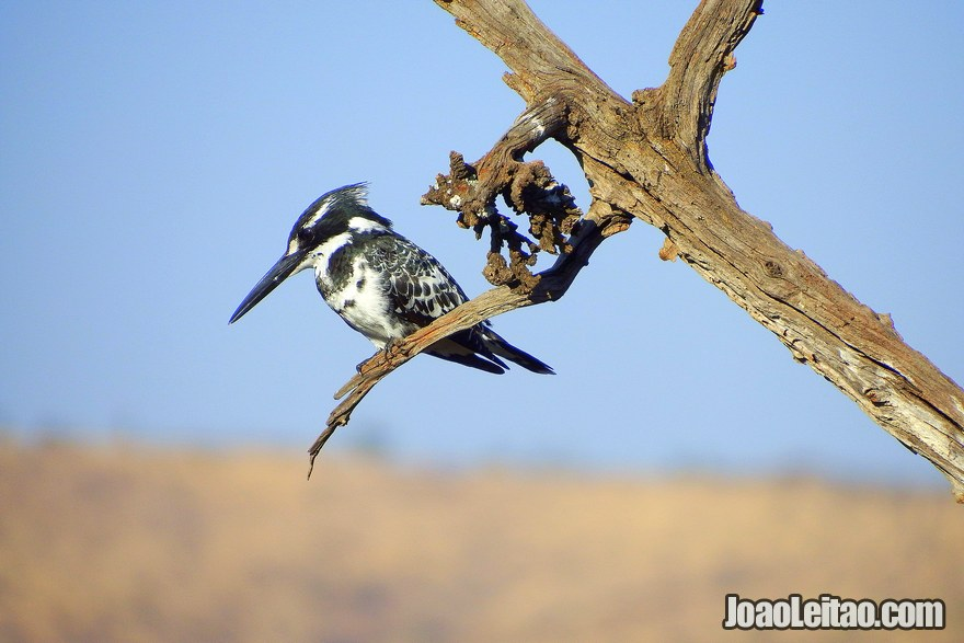 Are there any birds around South African parks?