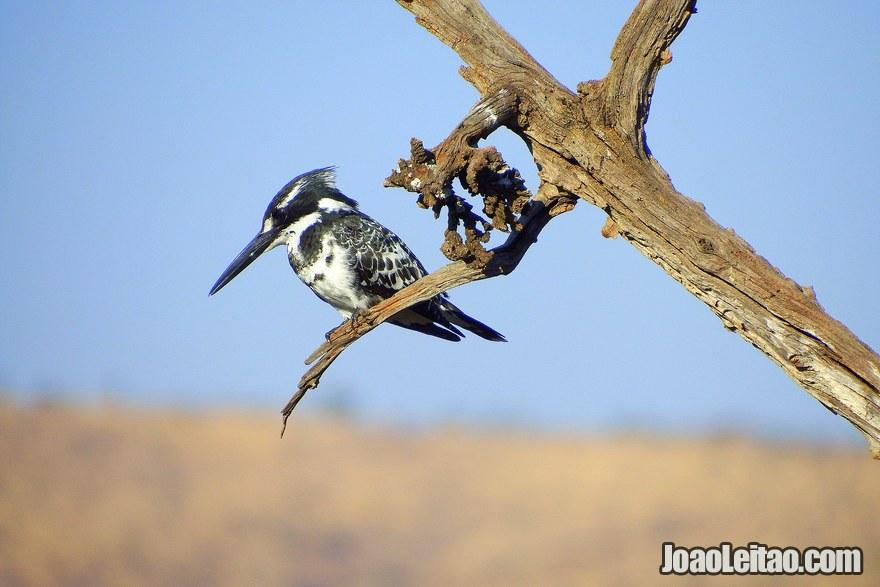 Existem pássaros nos parques sul-africanos?