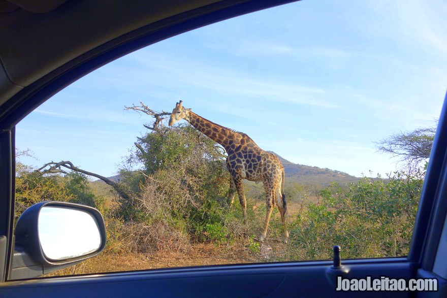 Self-drive South Africa guide to parks & game reserves