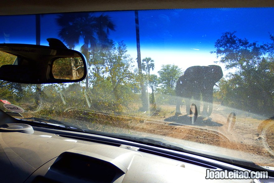 Elephant Car Insurance Drive Any Car