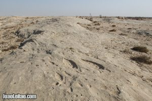 Al Jassasiya Rock Carvings in Qatar