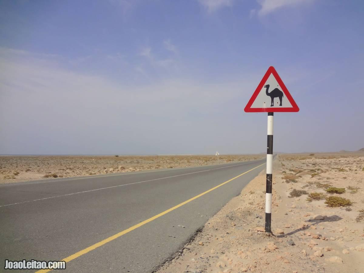 CAMEL ROAD SIGN OMAN