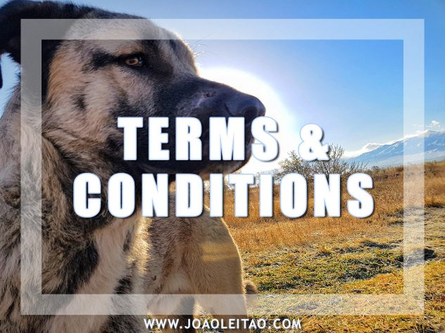 BLOG TERMS AND CONDITIONS