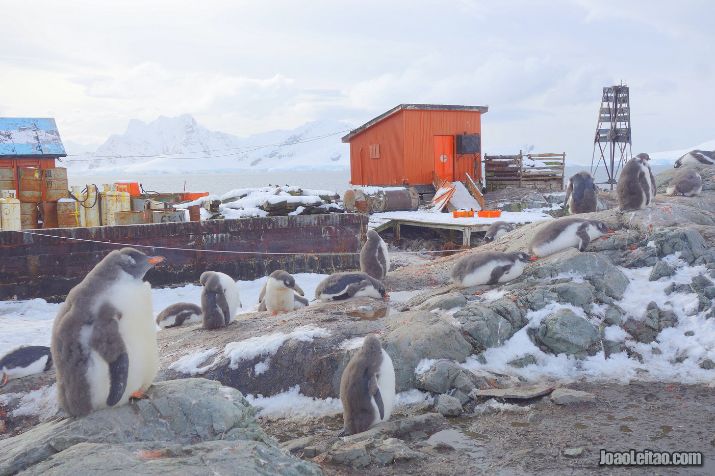 Visit Almirante Brown Antarctic Base