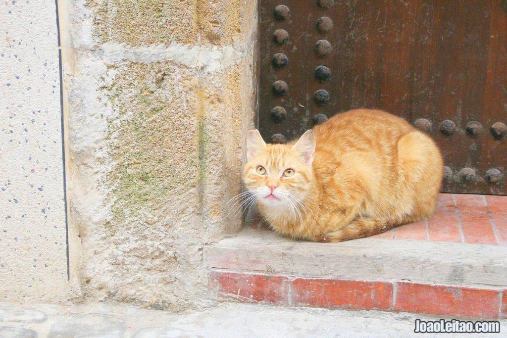 CATS ESSAOUIRA MOROCCO