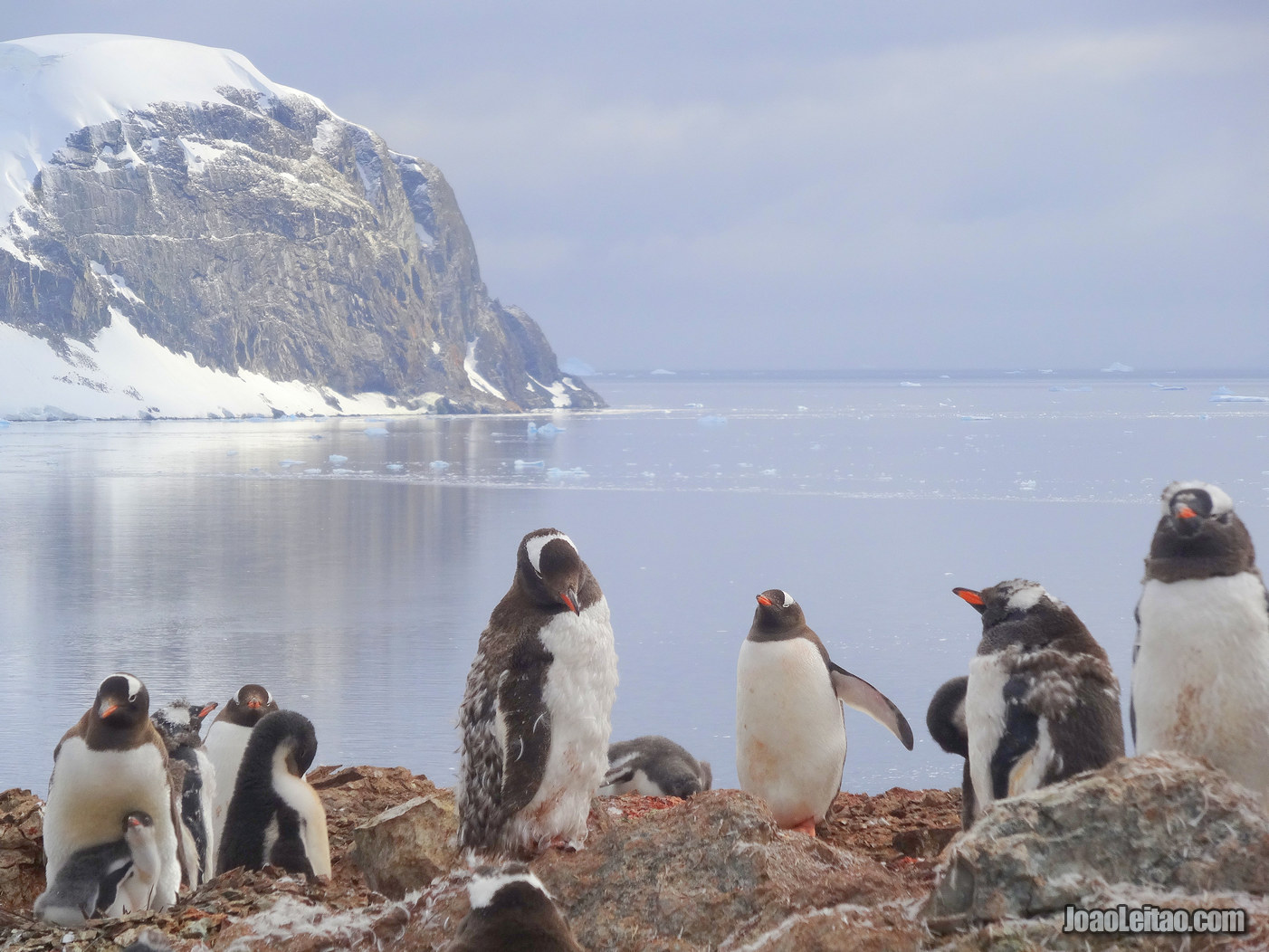 Danco Island in Antarctica