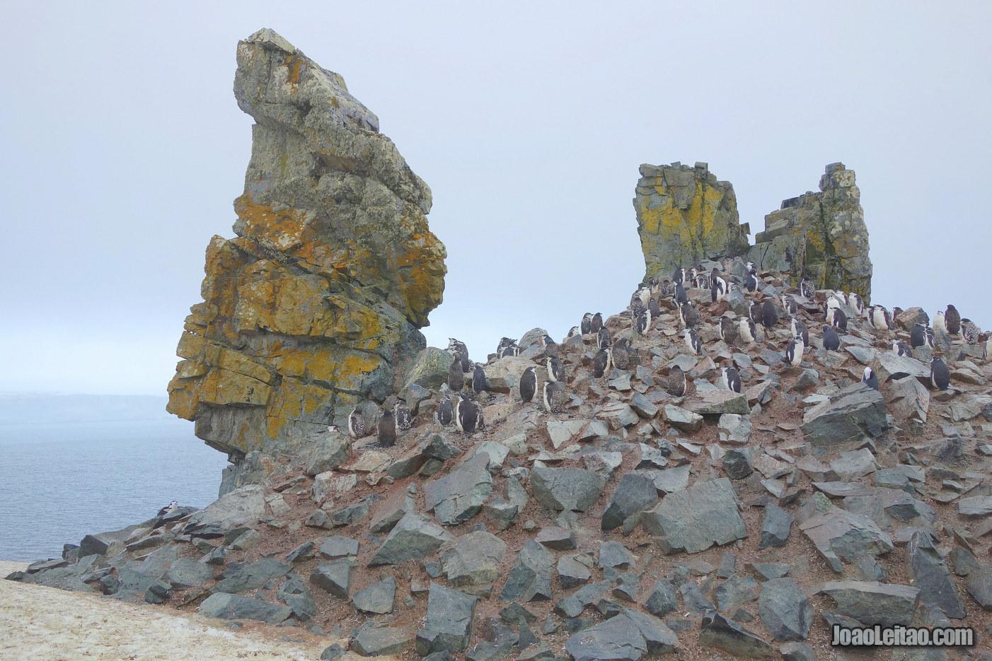 Visit Half Moon Island in Antarctica