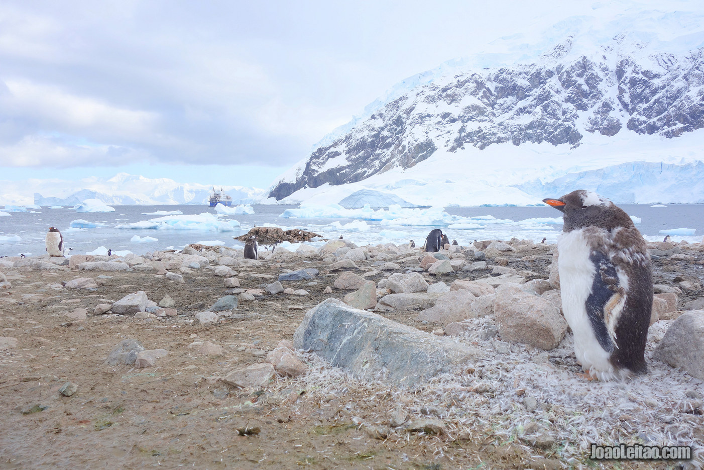 Visit Neko Harbour in Artarctica