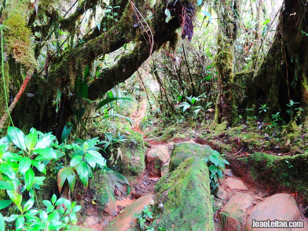 Mount Roraima 6-day Trekking Tour
