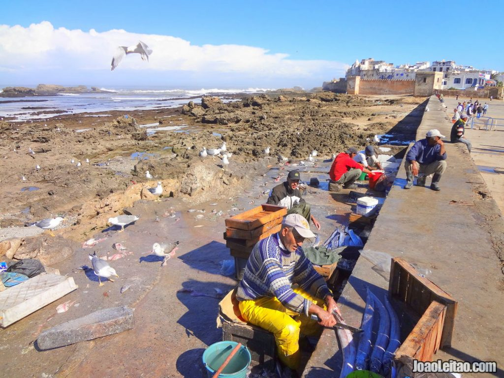 Visit the fishing port of Essaouira