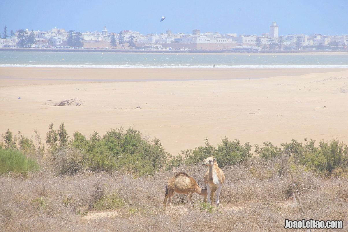 When to Visit Essaouira