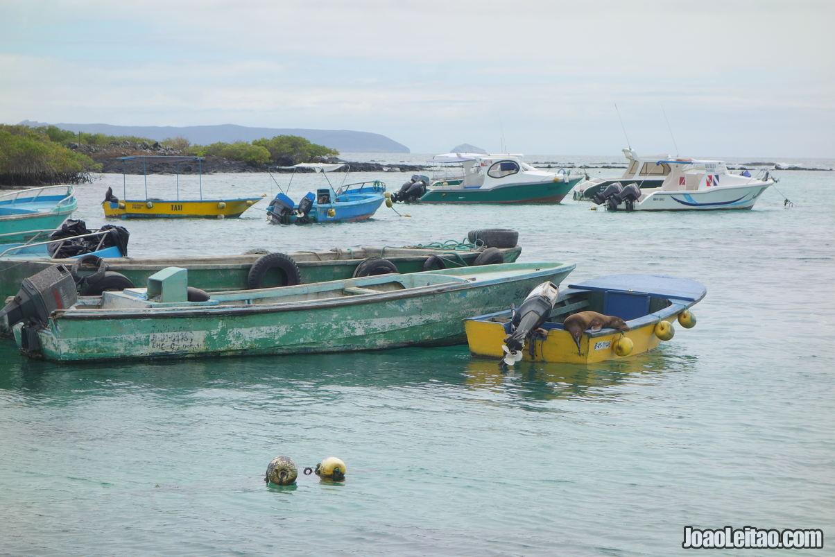 Isabela Island Galapagos in Ecuador