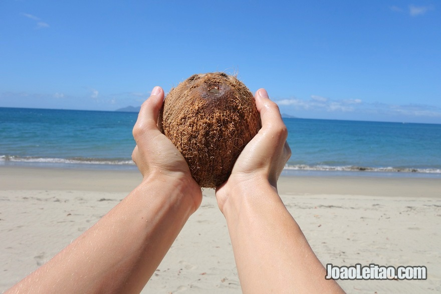 Pick and eat coconuts at the beach