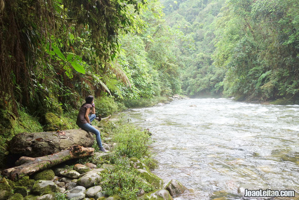 Podocarpus National Park in Ecuador