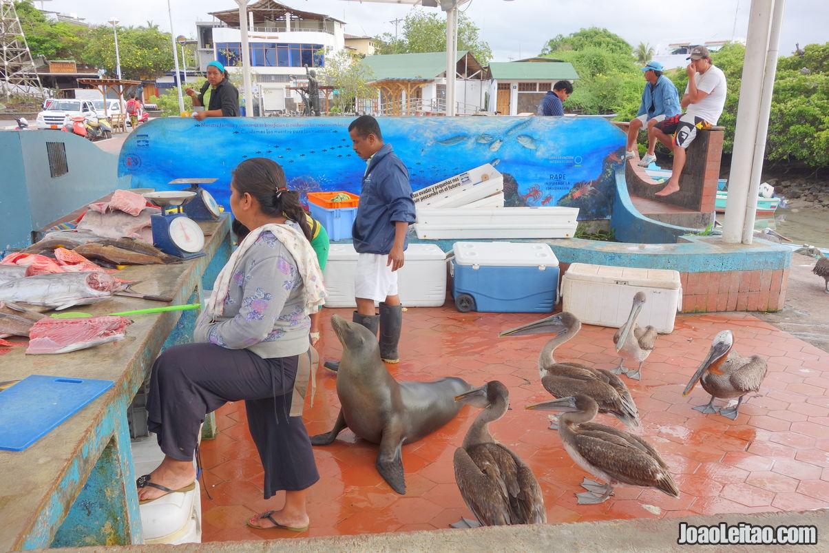 Santa Cruz Island in Ecuador