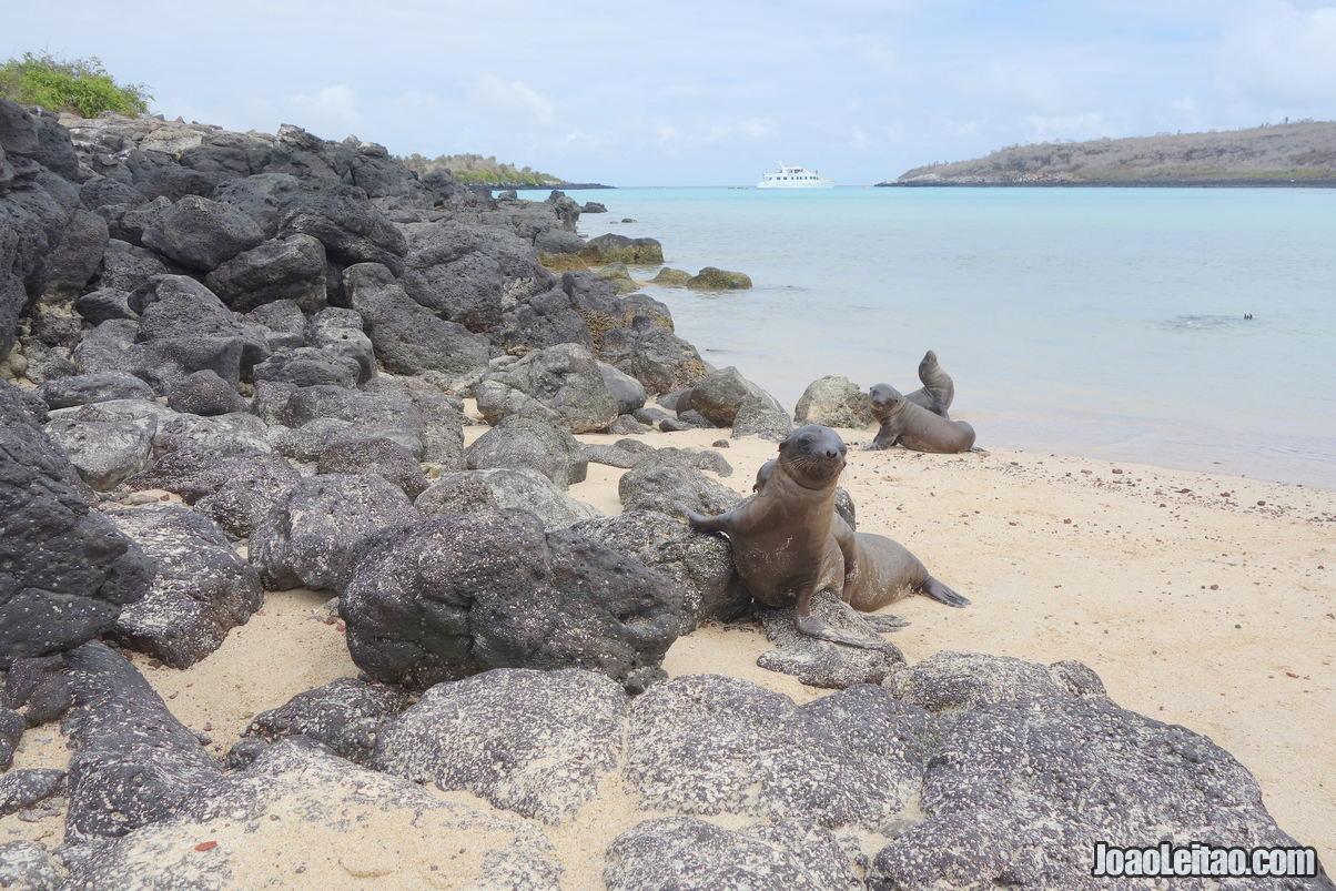 Santa Fe Island Galapagos in Ecuador