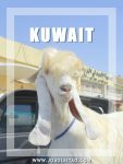 Amazing places to go when you Visit Kuwait
