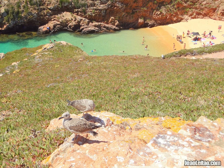 Berlengas Nature Reserve