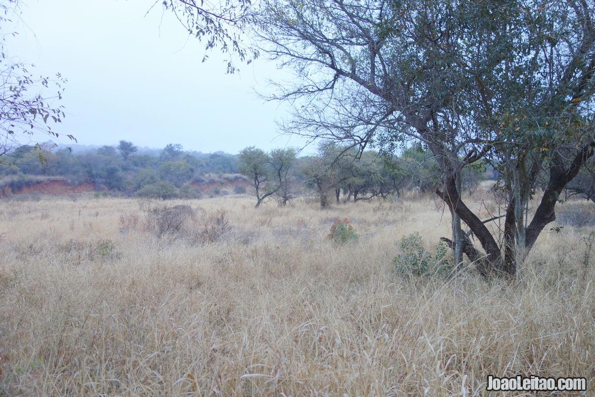 Manavhela Ben Lavin Nature Reserve