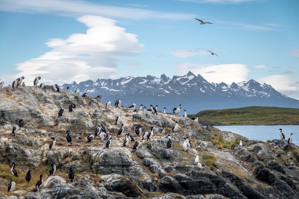 Cormorants island in Beagle Channel
